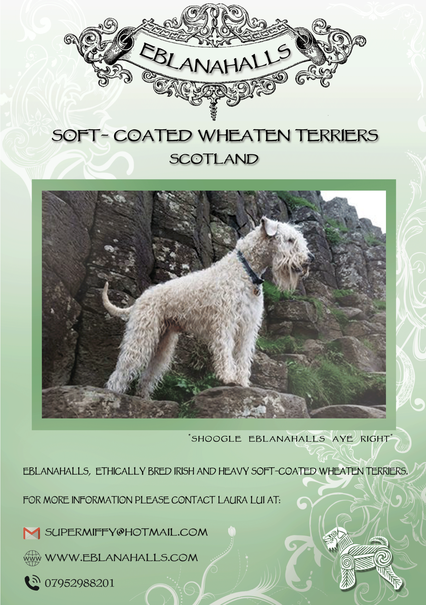 Our Soft Coated Wheaten Terrier Club Of Gb Advert 2018 Eblanahalls
